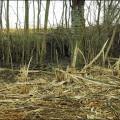 Ausholzung (Febr. 2015)