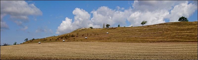 Schwellenburg mit Insektenfallen [Foto: E. Schön]